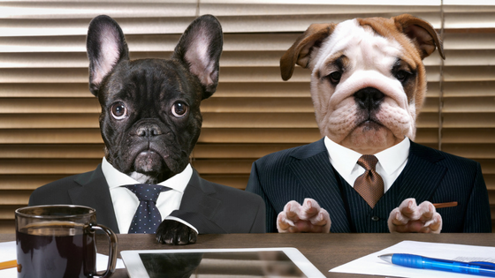 Open Office Dogs_Blog Title